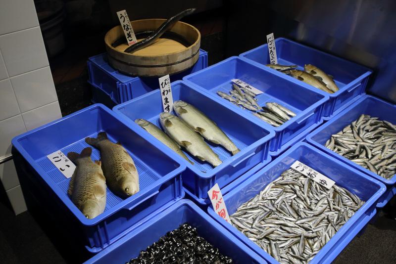 琵琶湖水系の魚たちを集めた模型は市場風