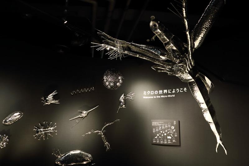 琵琶湖の生態系を支えるミクロの世界「マイクロアクアリウム」も充実しています