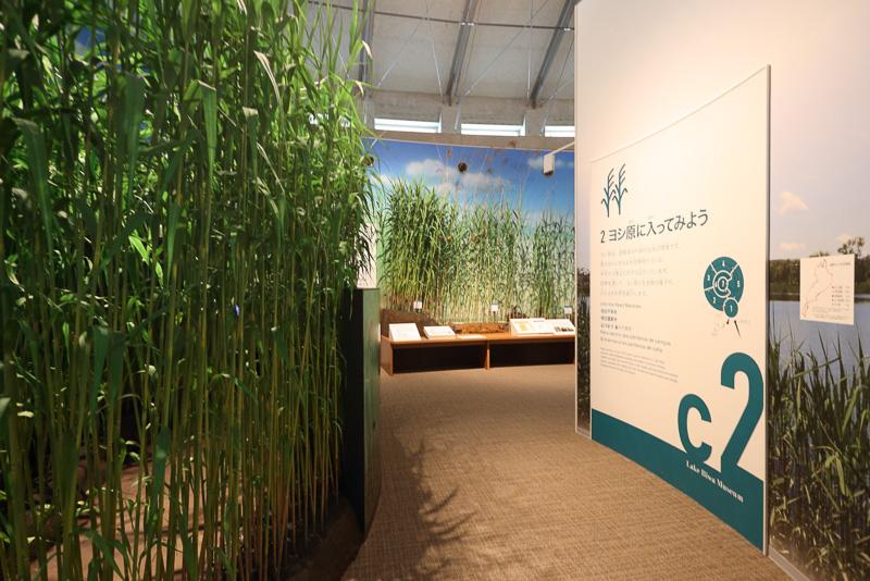 琵琶湖畔を覆う葦の展示はその匂いまで体験できる熱の入れようです