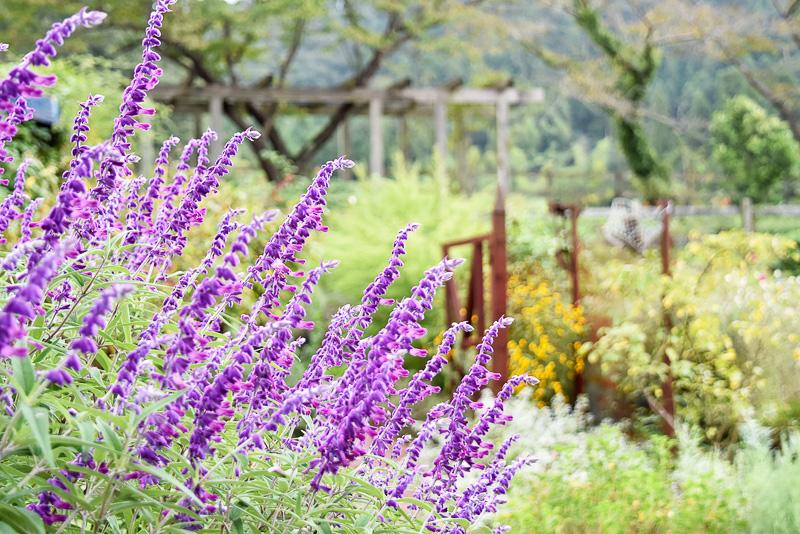一見無造作に咲いているように見えて、実はしっかり調和がとれているのです。味のある木のフェンスもイギリスから取り寄せたものなんだとか