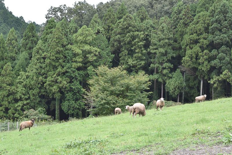羊たちに餌をあげたりできるふれあい広場も