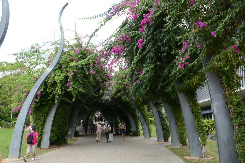 ブーゲンビリアのトンネルはエリアによって形が違うので、注意深く見ながら歩くと楽しい