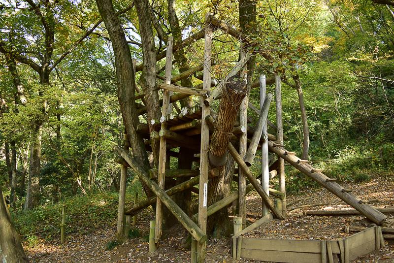 「樹上の家」。私も童心に返って登ってみました