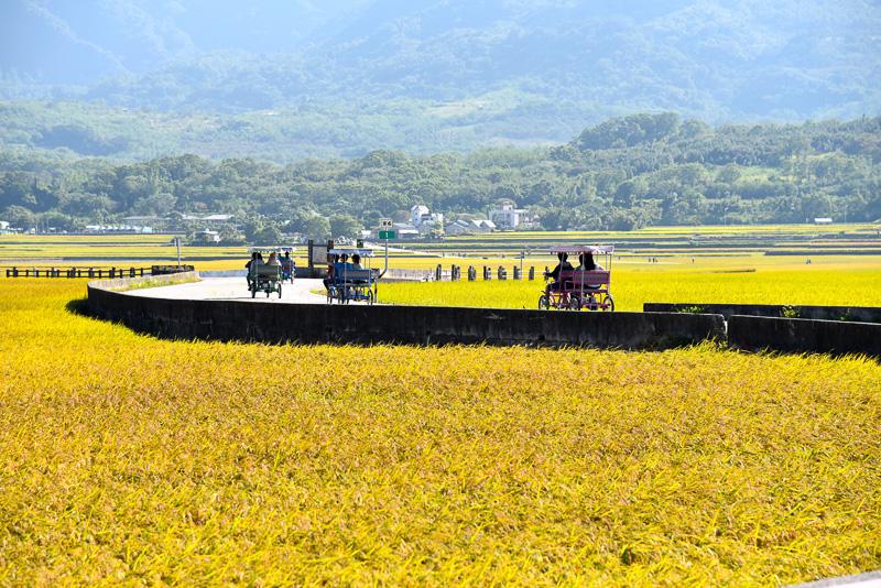 金色の田園風景が広がる小道をひた走る