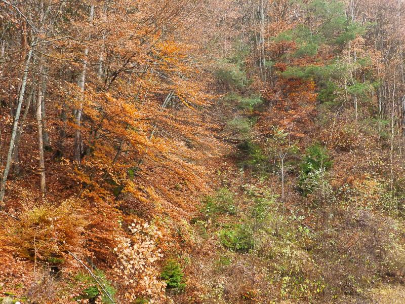 このような美しい紅葉の景色が……