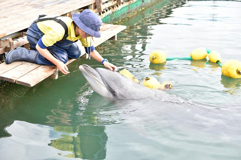 取材時はイルカの調教中で一般向けにはアトラクションを行なっていなかった。飼育員と打ち解けるまでには、かなりの時間を要するとのこと