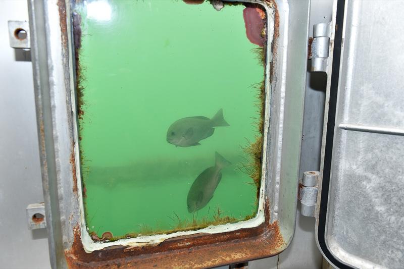円形の海中水族館の壁面には、周囲を泳ぐ魚たちを見られる