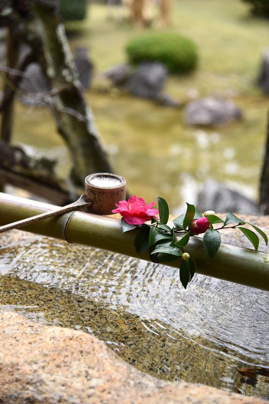館内に生けられた花たちも風情があり、景色と馴染んでいた