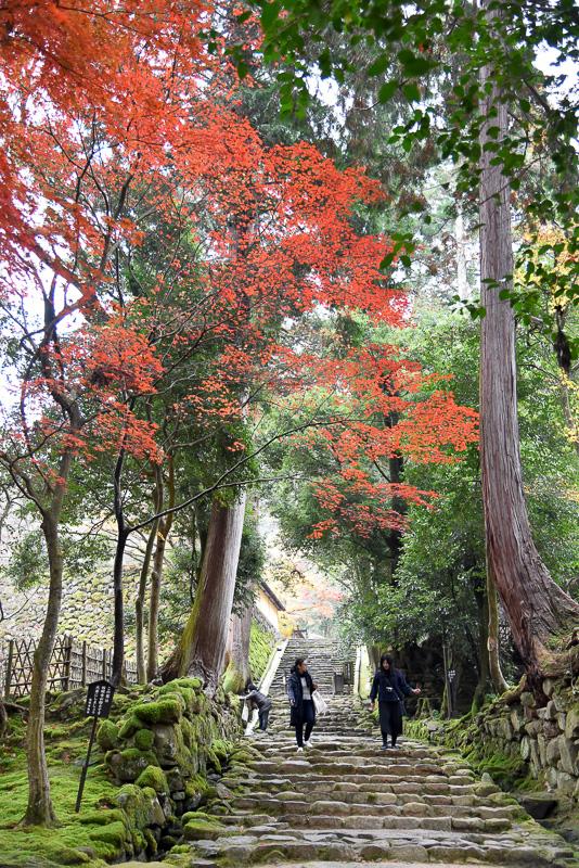 惣門をくぐると深い緑と紅葉の赤に彩られた参道が広がる