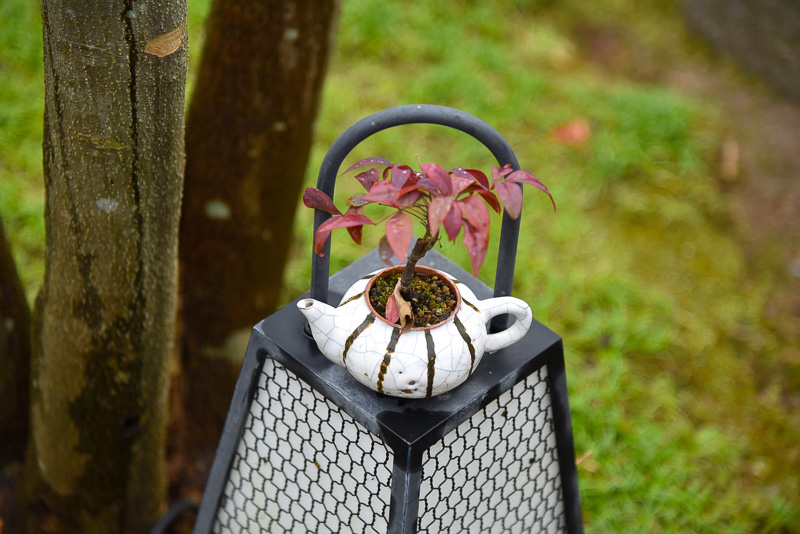 庭には、小さな盆栽も多数あり、眺めているだけでも楽しい