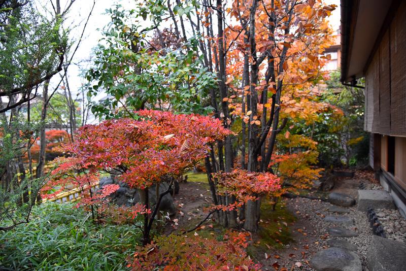 部屋から見た庭の様子。紅葉が美しい