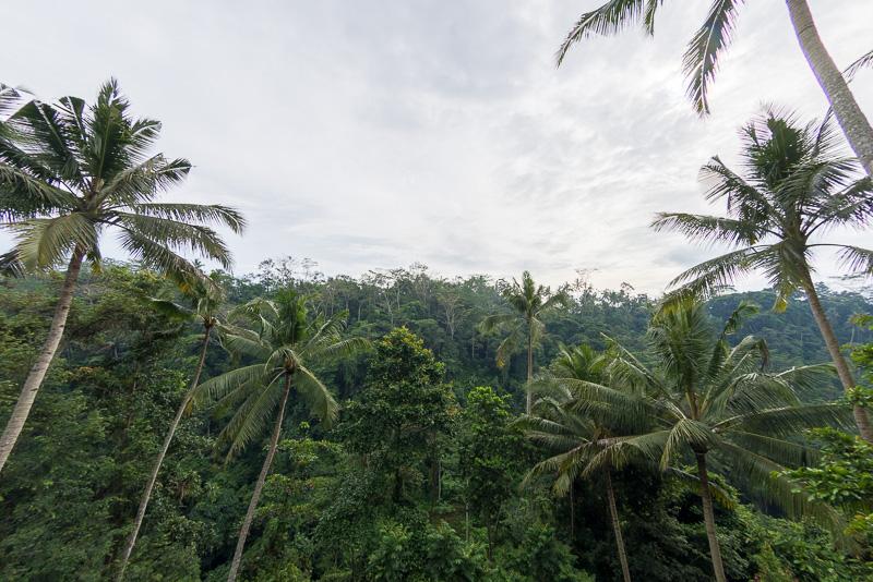 カフェ・ガゼボから眺める熱帯の木々。ジャングルらしい雨の日の風情も必見とか