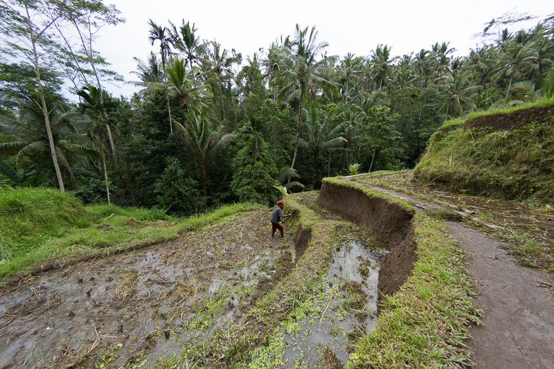 あぜ道を進む。途中、実際に農作業をしている人の姿もあった