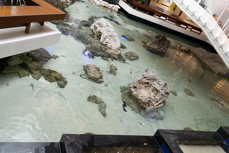 ロビーには多彩な海の生き物たちが泳ぐ池