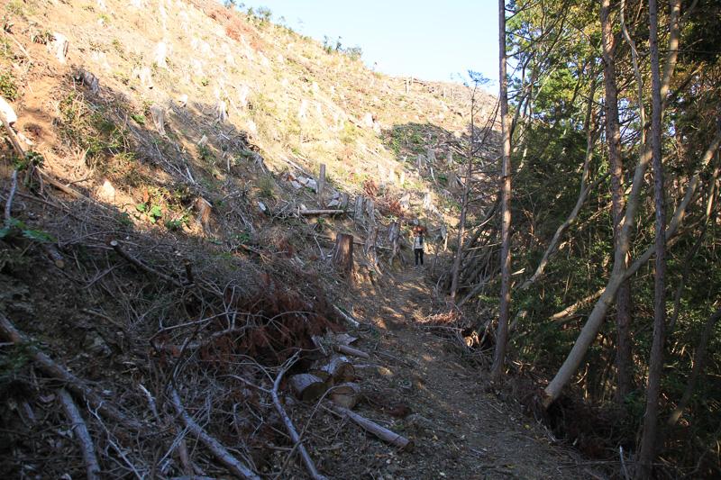 現在の潮見峠周辺は杉の植林が盛ん。伐採されたあとのはげ山に沿って進む