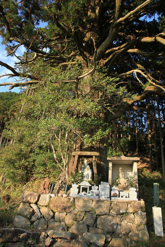 逃げる安珍を追ってきた清姫が、悔しさのあまり身をよじらせ、杉の木までも曲げてしまったといういわれのある捻木の杉