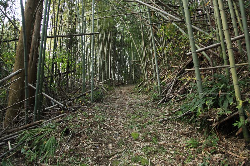 うっそうとした竹林を下る。足元はやわらかく歩きやすい