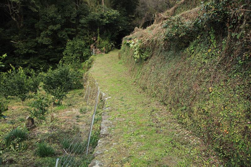 みかん畑に沿って歩く。現在では農道としても利用されている。道路の両側は私有地のため入らないように