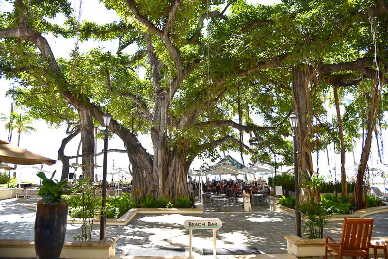 「モアナ サーフライダー ウェスティン リゾート&スパ」では、1904年に植樹され樹齢100年を越すバニヤンツリーがお出迎え
