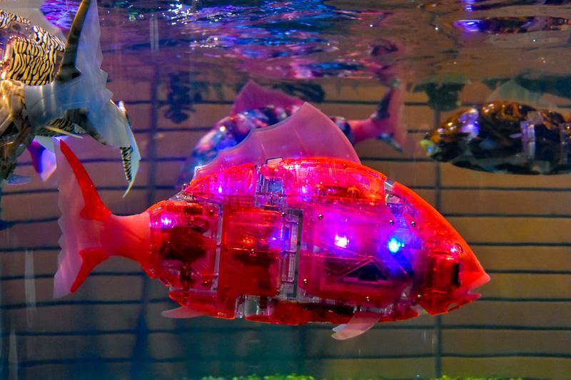 ホテルとしては関東で初めて導入された魚ロボット