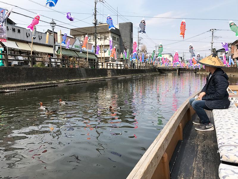 まだ鯉太郎を探しています