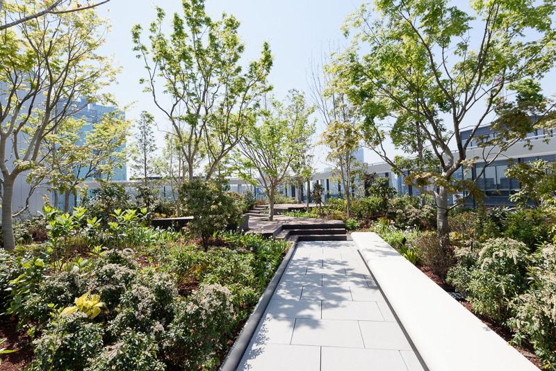 広場北側には桜、南側には紅葉をメインにした植栽があり、季節の変化を感じることができる