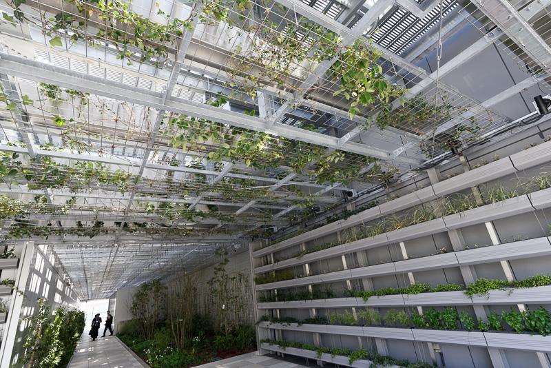 壁やルーフに植えられた大量の植物。年月を経ることで成長し、一面を緑が覆うことになるという