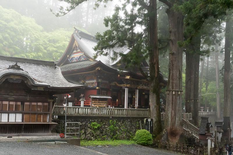 階段を登りきった先に立派な拝殿がある。手前に樹齢800年のご神木