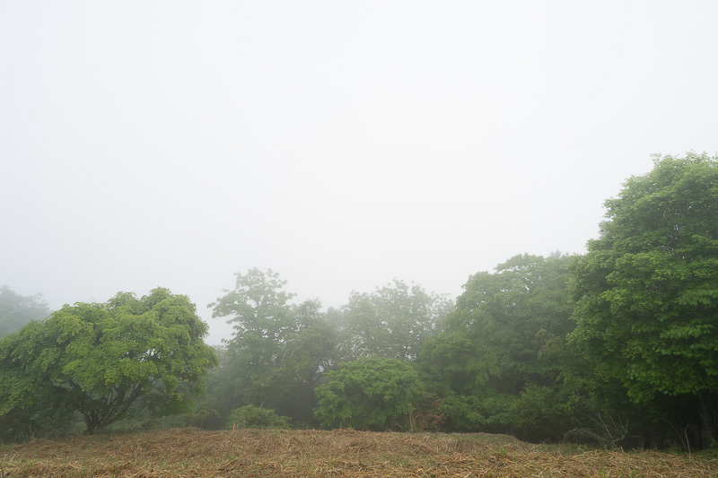 少し離れた場所にある三峯公園展望の丘方面に来てみたが、やはり晴れ間はなかった。晴れていれば秩父盆地を眺望できるスポット
