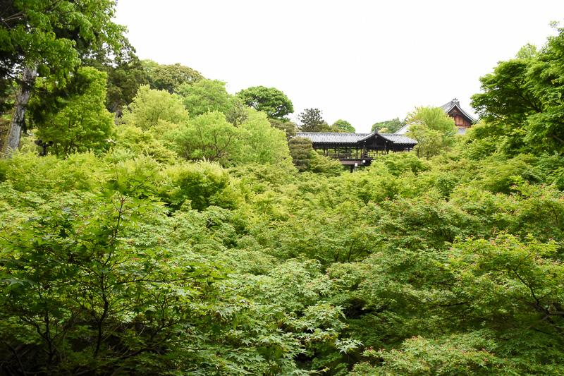 臥雲橋から東福寺境内に至る道で、早くも青もみじを堪能できる