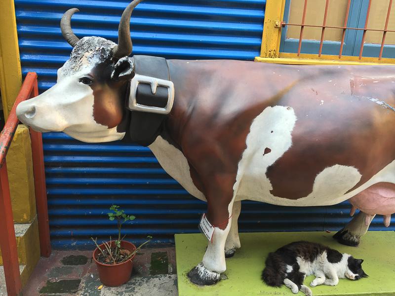 牛と同化する猫