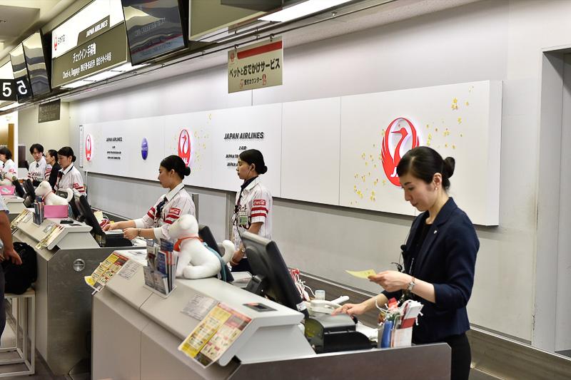JALのカウンターのバックオールも飾り付けが施されて七夕仕様に