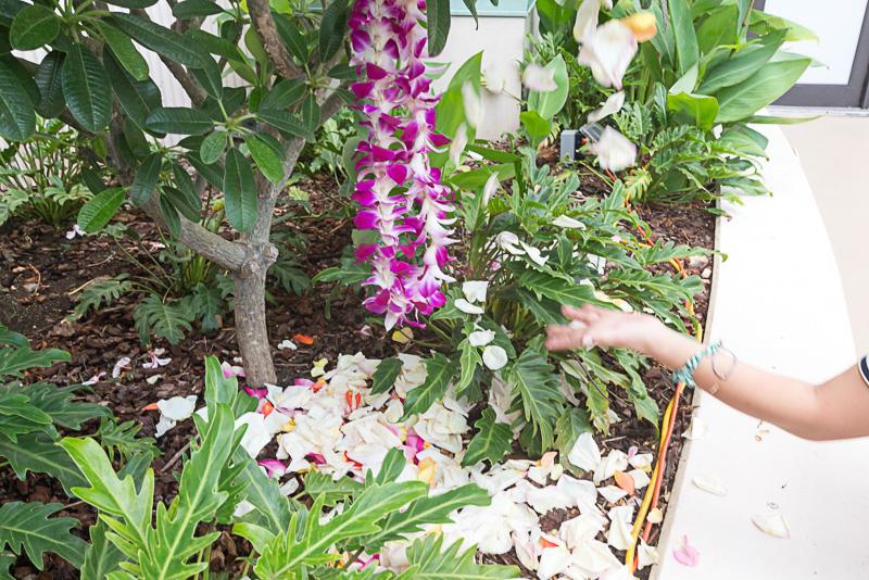 感謝を込めながらハワイ語で歌いながらレイなどを戻す