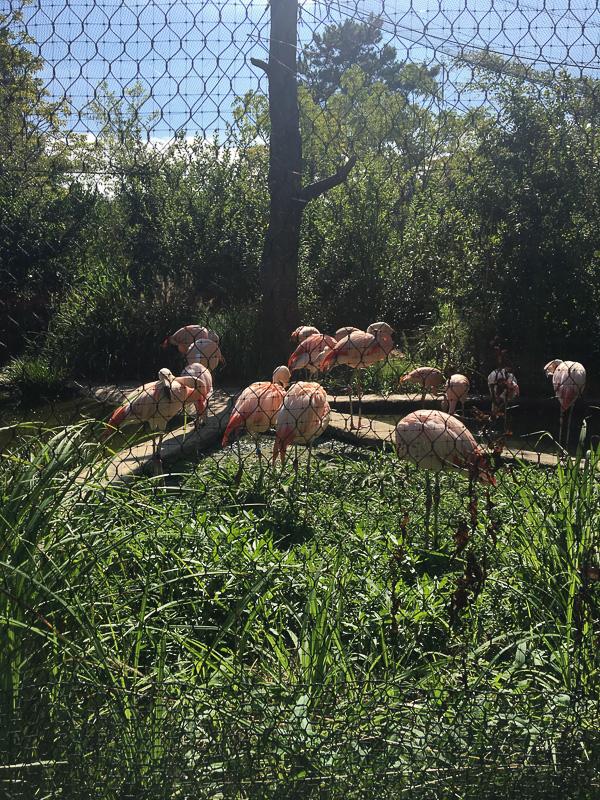 美しいフラミンゴの群れ