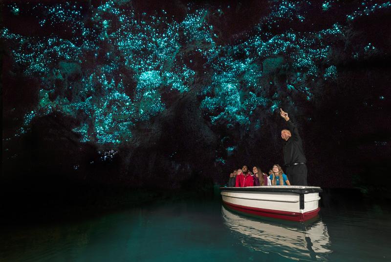 ワイトモのグローワーム(写真提供:Hamilton & Waikato Tourism)