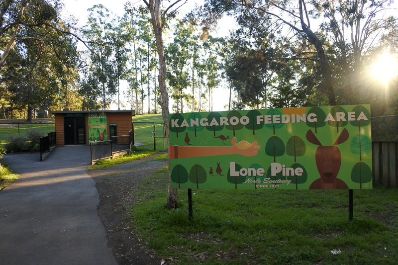 「KANGAROO FEEDING AREA」へ。入った途端にエミューがご挨拶してくれた。もちろんモフモフと羽にタッチ