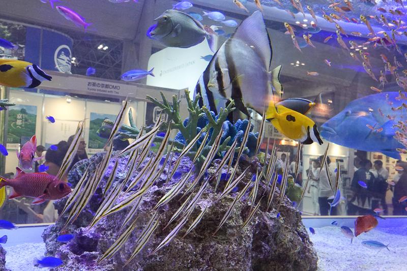 水槽には珍しい魚も。縦になって泳いでいるヘコアユ