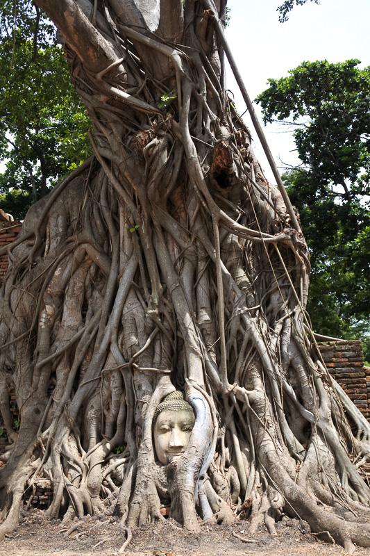 木の根に抱かれた仏頭