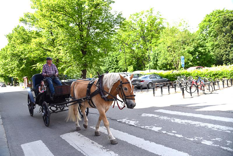 散歩中、蹄の音とともに馬車がやってきた