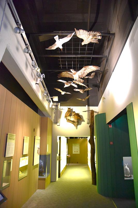 「自然史博物館」では上を見上げたり、穴に入ったり空間を最大限に使った展示を行なっていた