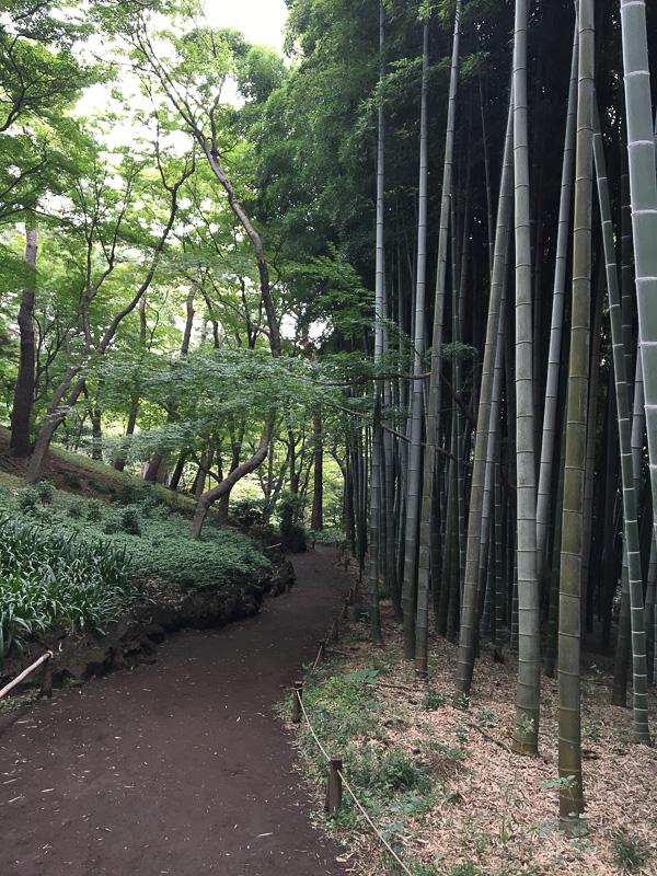昔話に出てきそうな竹林。竹の小径を歩きます