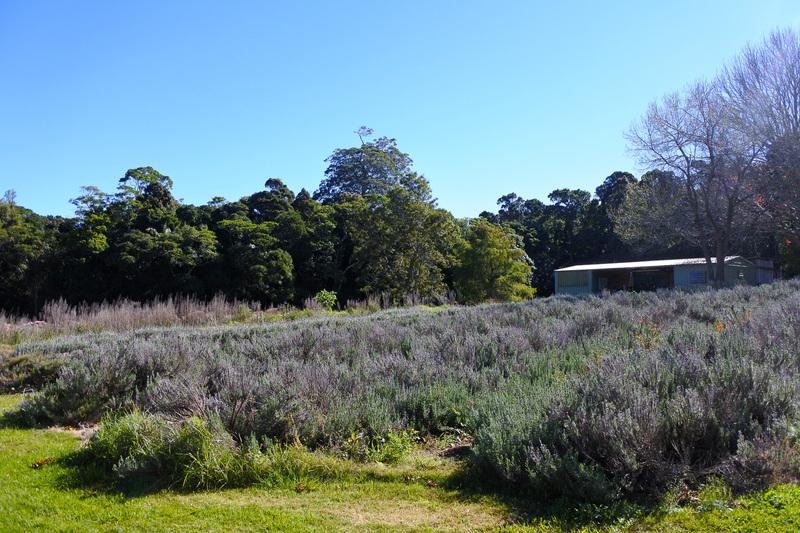 周囲にはラベンダーなどを栽培する「Organic Farm」が取り囲み、収穫したものは製品に使用される。訪れたゲストは周囲を散策して楽しめる