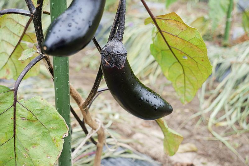 時期によって異なる旬の野菜の収穫などを体験できる