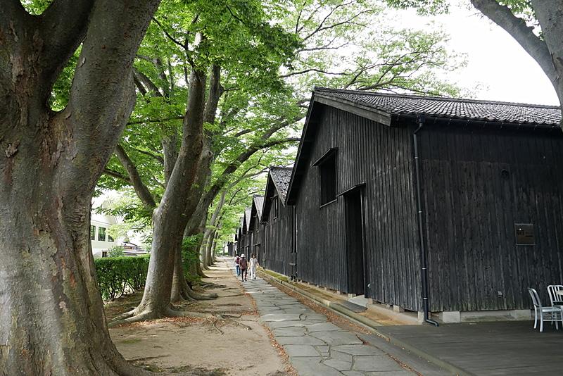 倉庫の裏には、冬の季節風から建物を守るために、欅並木が作られている