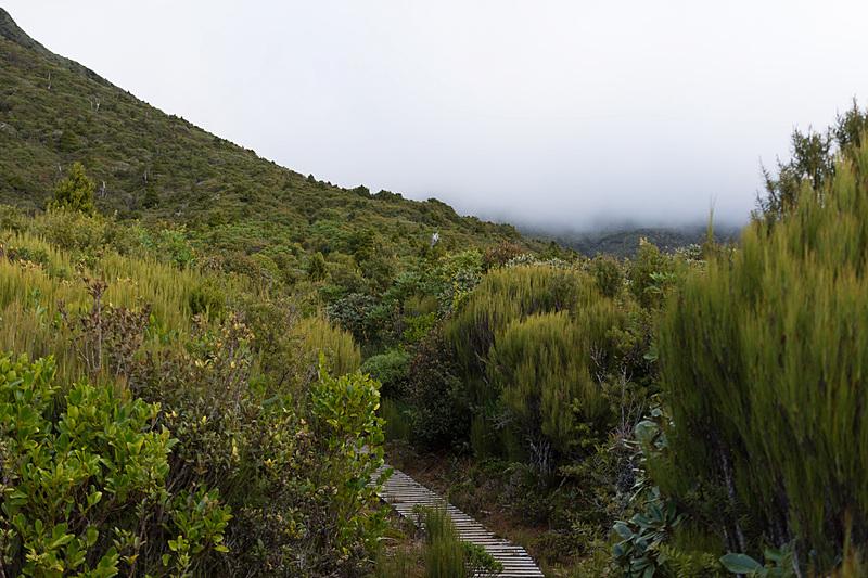しばらく歩くと深い森を抜けて、亜高山の雰囲気に。曲がった針葉樹に自然のダイナミクスを感じる