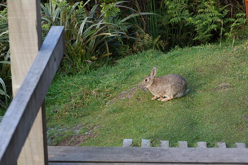 ふと見るとウサギの姿。「かわいい!」と思ってしまうが、人間が来るまではそこにいなかった哺乳類。国立公園内では哺乳類を捕らえる仕掛け(写真右)も頻繁に見かけた