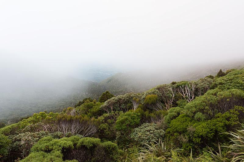 ビューイングポイントを目指して歩き始めるとこの霧