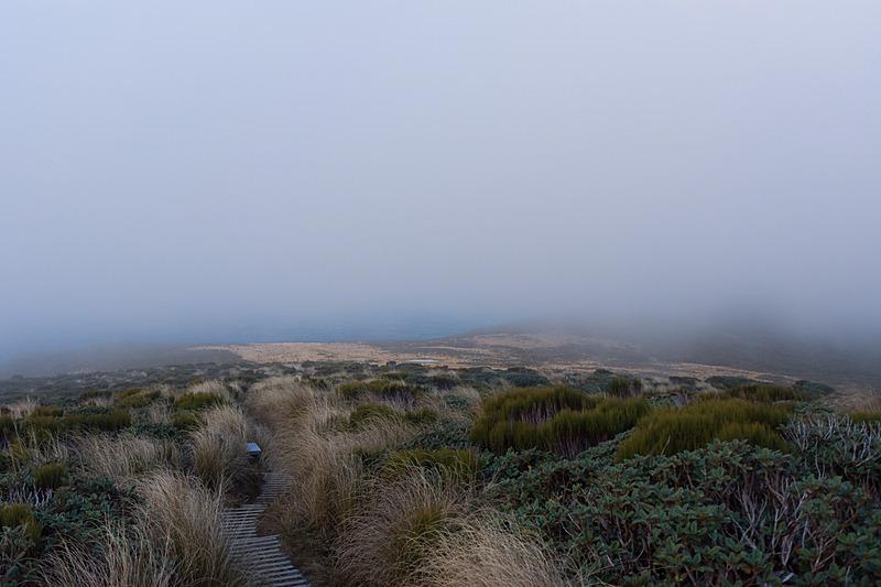 ニックさんが「この先が目的地だ」という風景。先に進んでもタラナキ山は見えないと判断して下山へ
