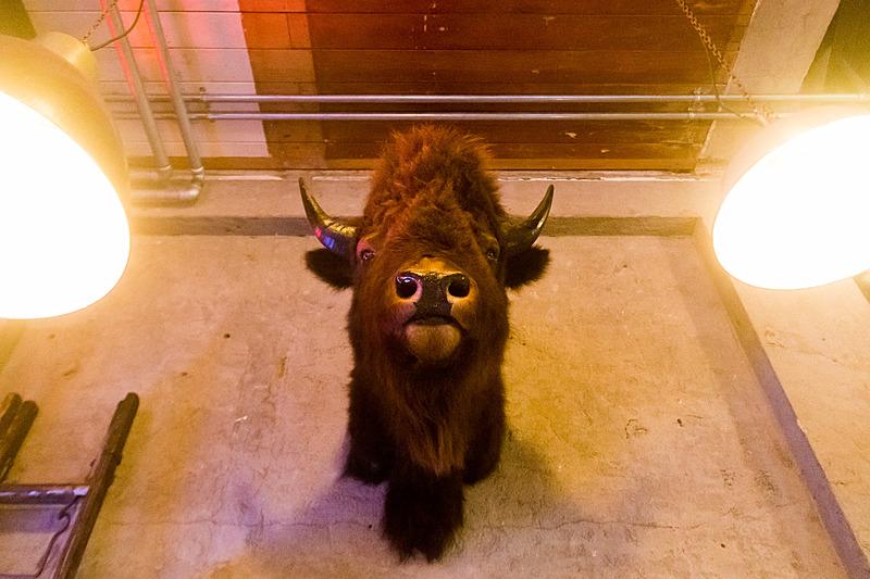 牛がお出迎え