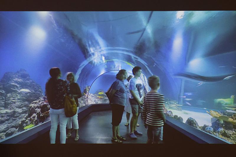 オーストラリアでは唯一の深海珊瑚礁の展示がある「ケアンズ・アクアリウム」